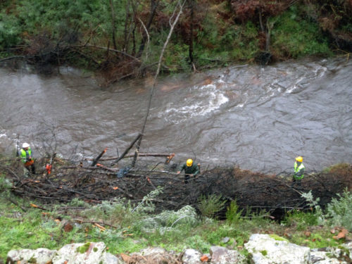 Limpeza Alge von Goladinha bis Entre Aguas, Firma Brava Fasquia