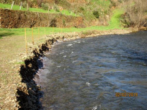 normales Winterwasser, Ufer des sanierten Bauchbetts bricht ab, Weidenstecklinge unter Wasser, gepflanzte Bäume in Gefahr, Goladinha