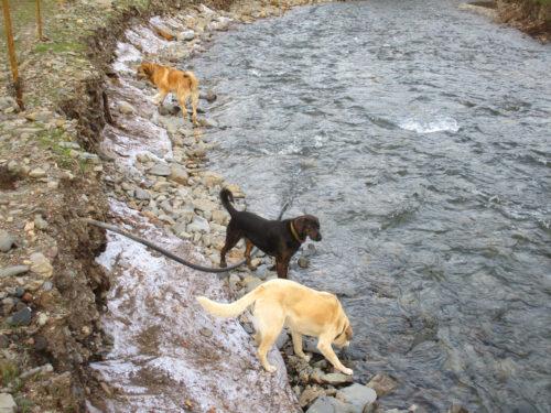 Malaica, Yuna, Filinha an der Alge, Goladinha