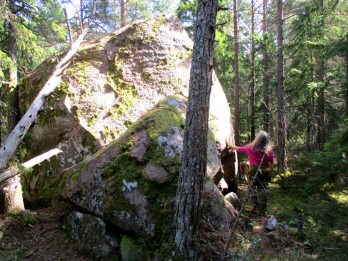 Estland 5 - Felsbrocken, Findling, Rändrahn, Naturschutzgebiet Koorunomme, Goladinha