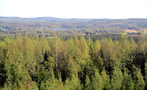 Finnland 5 -AussichtsTurm, Goladinha