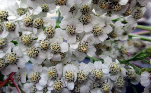 Finnland 2 - Blumenstrauss, 26. August, Goladinha