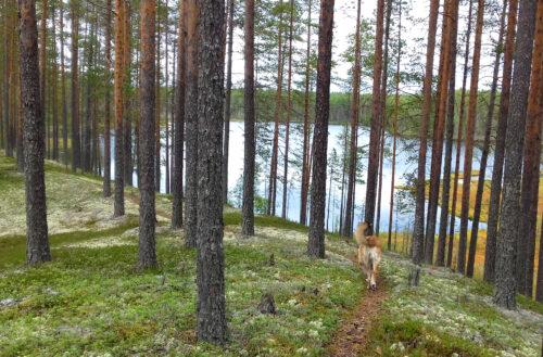Finnland 11 - kleinen See entdeckt, Spazieren gehen, Goladinha