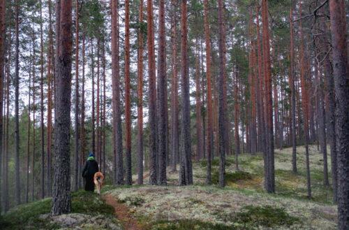 Finnland 12, Waldspaziergang, Goladinha