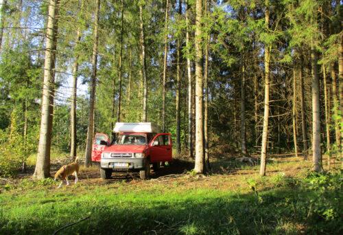 Litauen, Rückreise, Standplatz, Wald, nahe Bisongehege, Goladinha