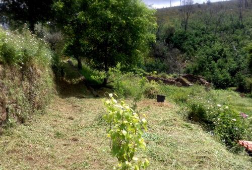 Garten, Horta, Gemüseanbau, Goladinha