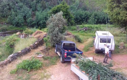 Bohnenstangen, Mimosen, Garten, Goladinha