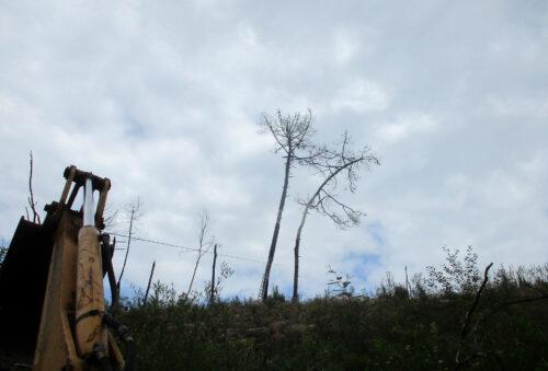 Die letzten Bäume der Nachbarn hängen auf unser Grundstück und sind eine Gefahr, Baggerlader, Baggger, Seil,Goladinha,