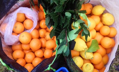 Orangen, Zitronen, Lorbeer, Mitbringsel, Goladinha