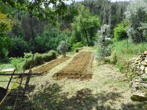 Garten, Anbau, gefräst, Goladinha